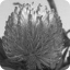 larowlan's picture